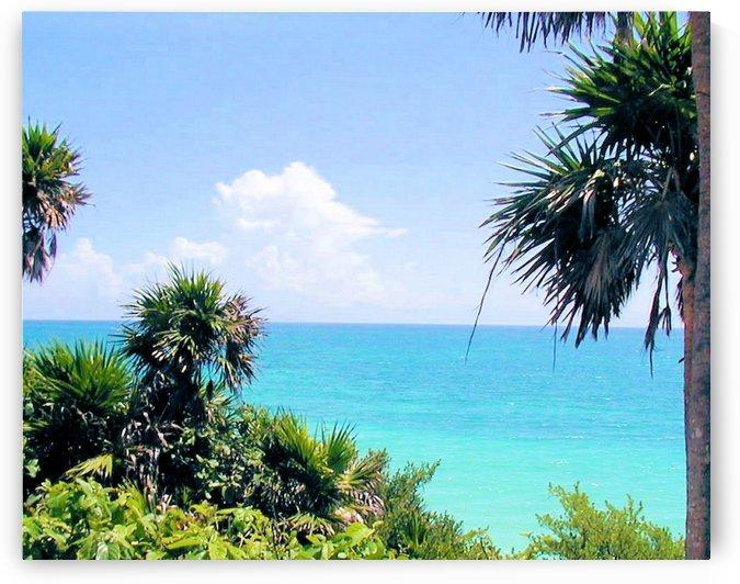 Tropical4 by Jodi Webber