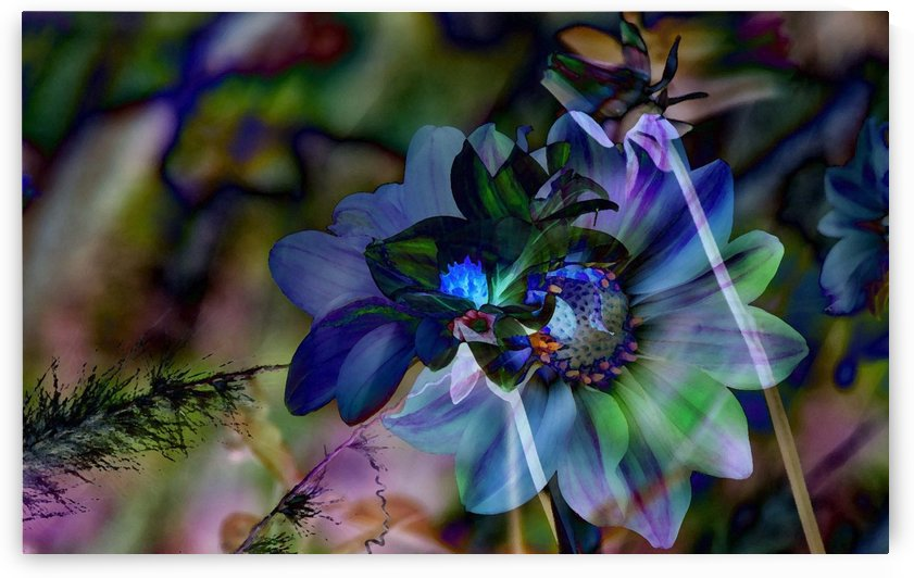 Touch of Blue by Violet