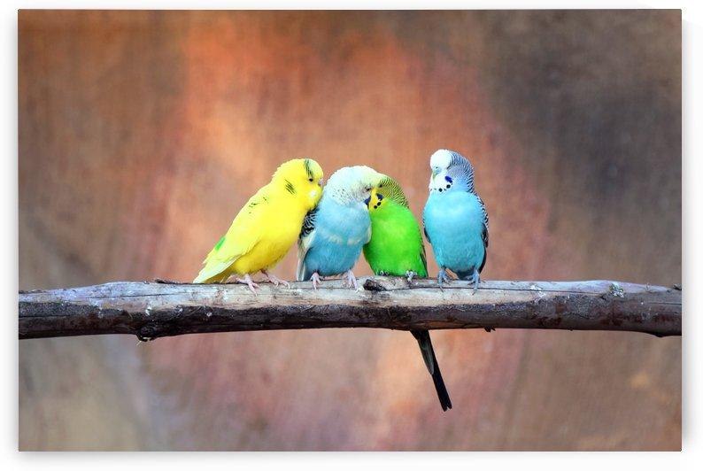 Flirting Parakeets by Kikkia Jackson