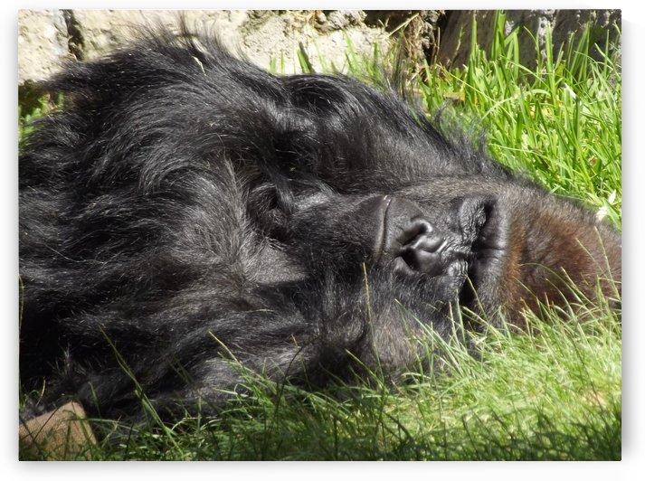 Gorilla Nap by Linda Peglau