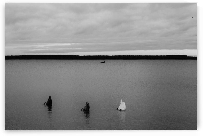 meri ja linnud 045 by Anu Hamburg