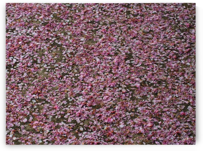 P5049664 Pink fruit flower leaves falling down pattern by CiddiBiri