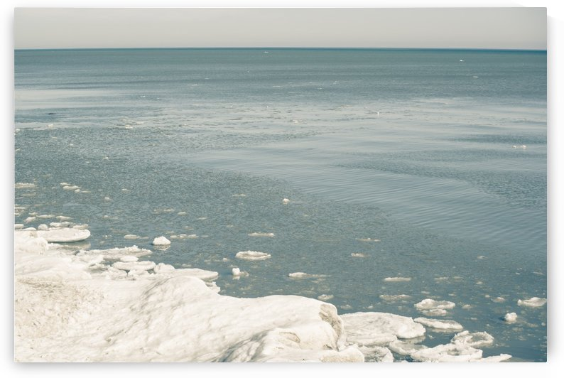 Blue Huron by Faded Photos