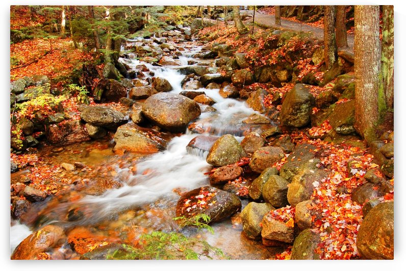 New England autumn stream by Pamela Winter