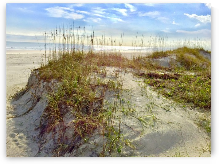 Anastasia Island Dunes by Pamela Winter