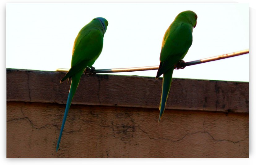 Two friends by Nilu Mishra