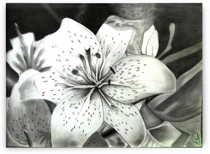 Lily by sheilabi