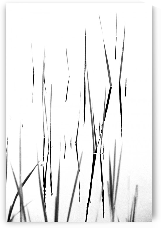 Aquatic Reeds Black And White by Deb Oppermann