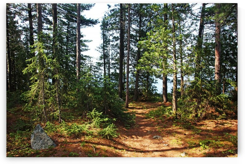 Temagami Island Campsite by Deb Oppermann