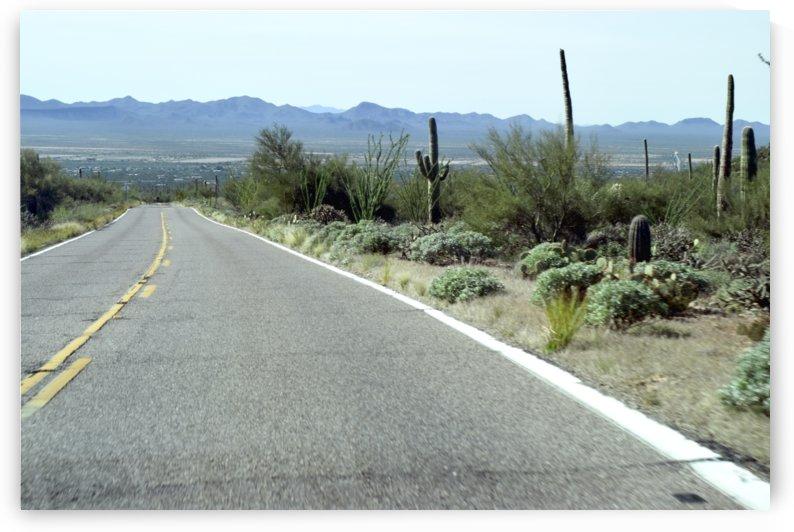 Desert Road by Angelo A Keene