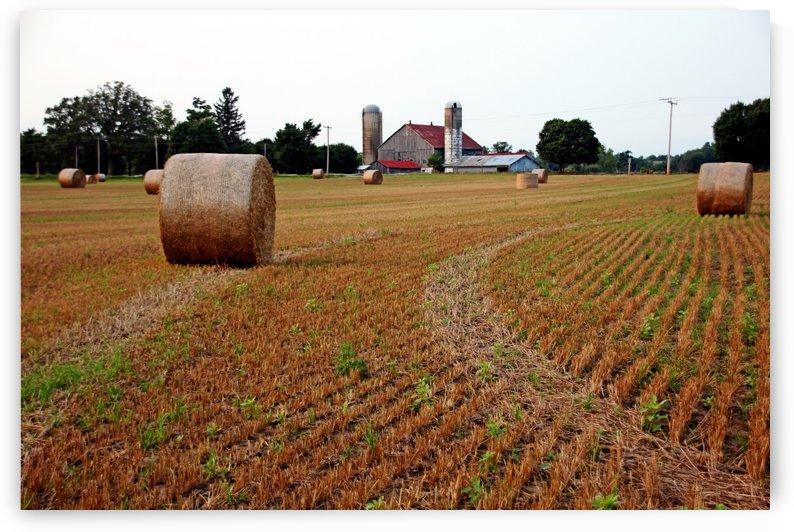 Make Hay by Deb Oppermann