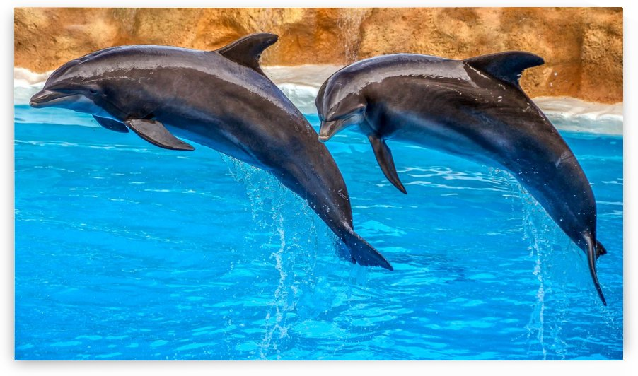 DOLPHIN FUN by ART AND INSPIRATION