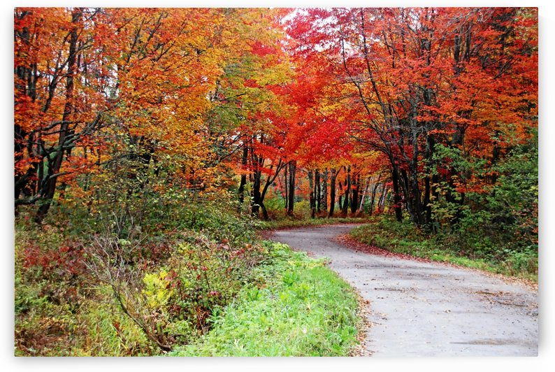Chikanishing Road In Fall by Deb Oppermann