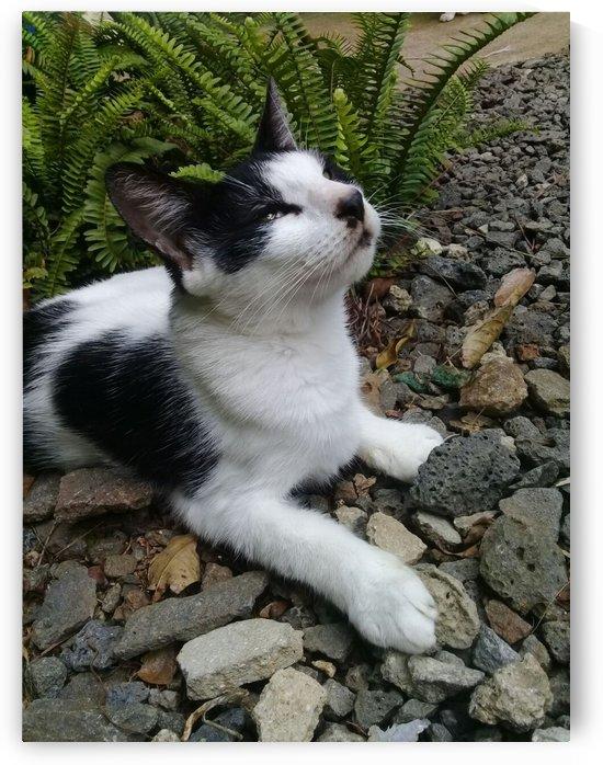 Cat by sheilabi