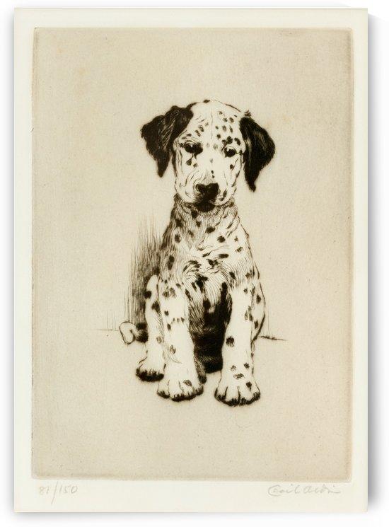 The Dalmatian by Cecil Aldin