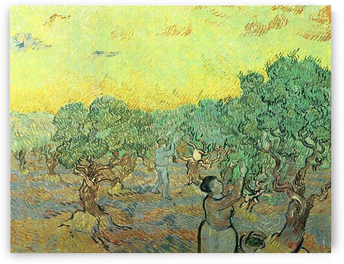 Olive pickers in a grove by Van Gogh by Van Gogh