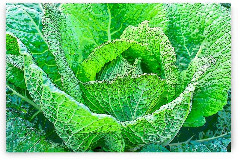 Harvest- La Recolte by Carole Ledoux Créations Cl