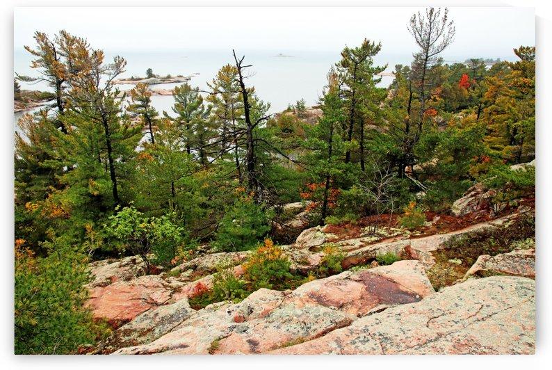 Pine Ridge by Deb Oppermann