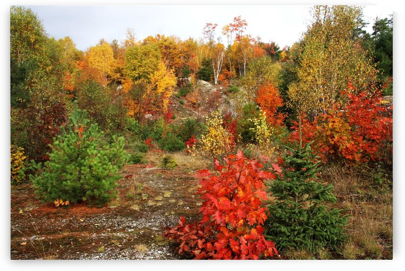 My Favorite Color Is October by Deb Oppermann