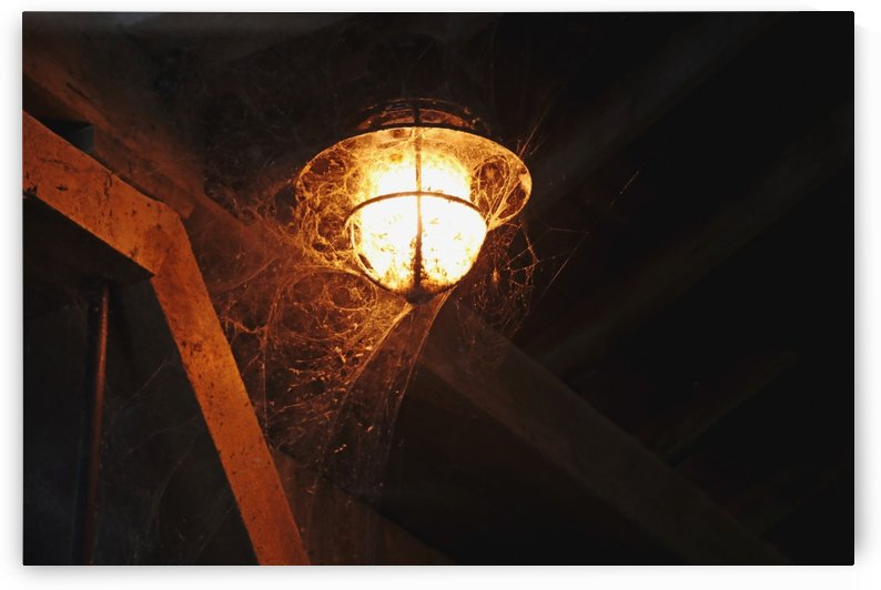 Cobwebs And Spiders by Deb Oppermann