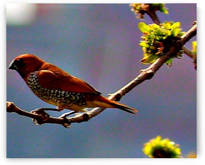 Bird1 by Nilu Mishra