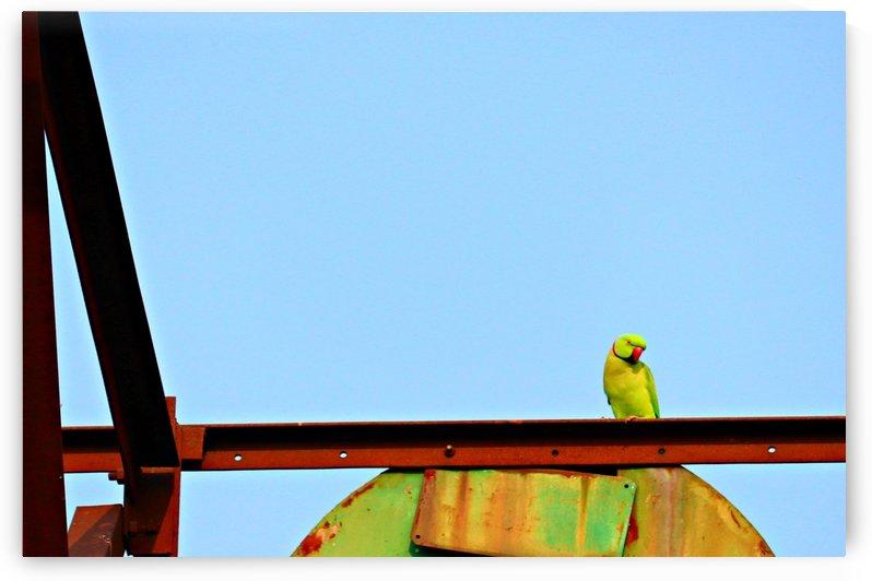 Bird 3 by Nilu Mishra