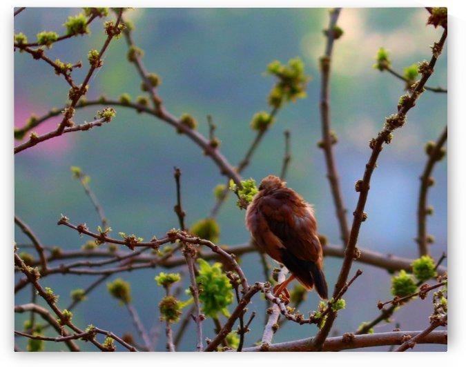 Beauty from back by Nilu Mishra
