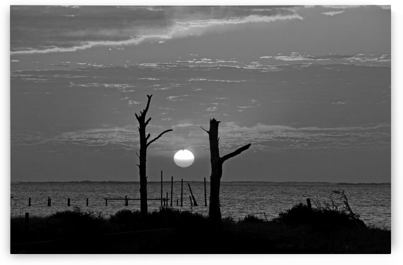BW Two Tree Sunset by Deb Colombo