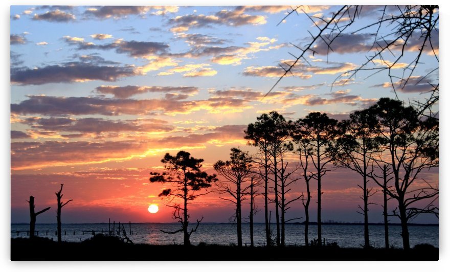 Sunset Trees at the Bay by Deb Colombo