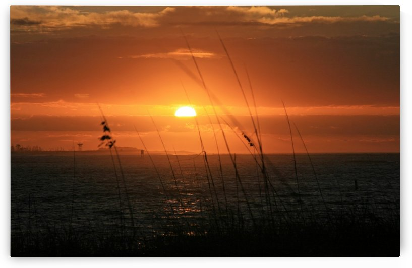 Sea Grass Sunset by Deb Colombo