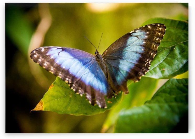 Butterfly by Billy Johnson