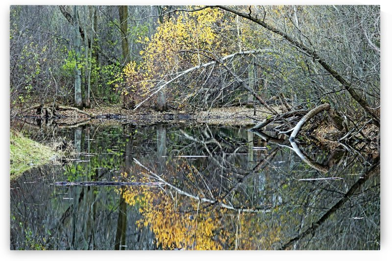 Reflecting by Deb Oppermann