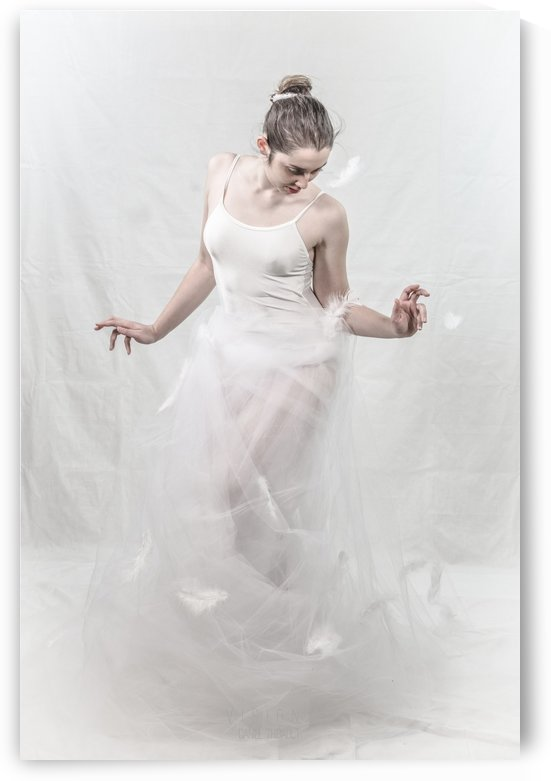 Le cygne 8 by Daniel Thibault artiste-photographe