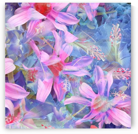 blooming pink and blue daisy flower abstract background by TimmyLA