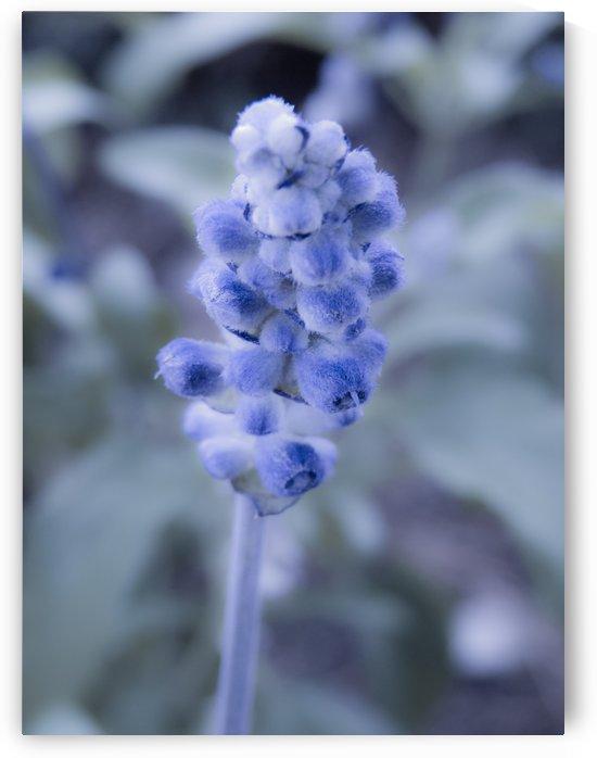 Purple flower  by Christy Garavetto
