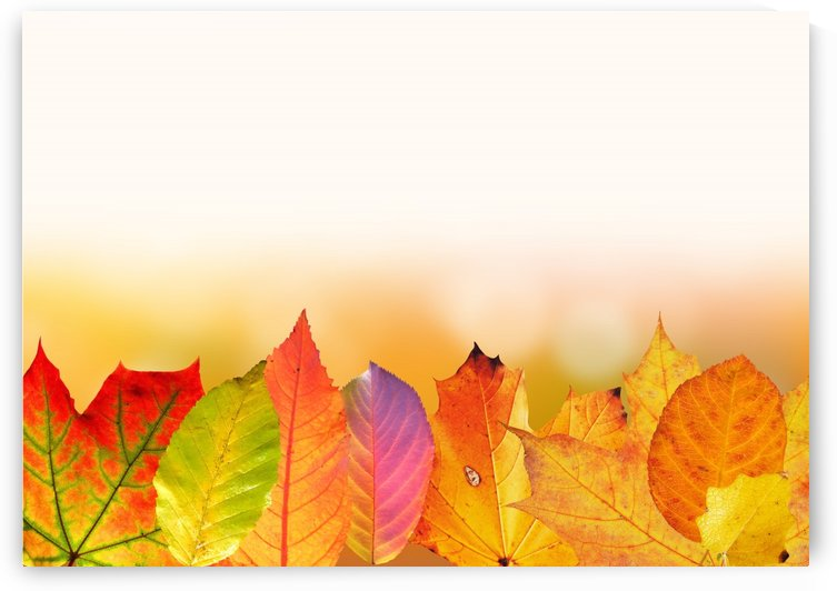 autumn, leaves, colorful, fall foliage, fall color, golden autumn, maple leaf, alder leaf, apple tree leaf, beech leaf, graphically, course, autumn colours, bokeh, fund, background, by fabartdesigns