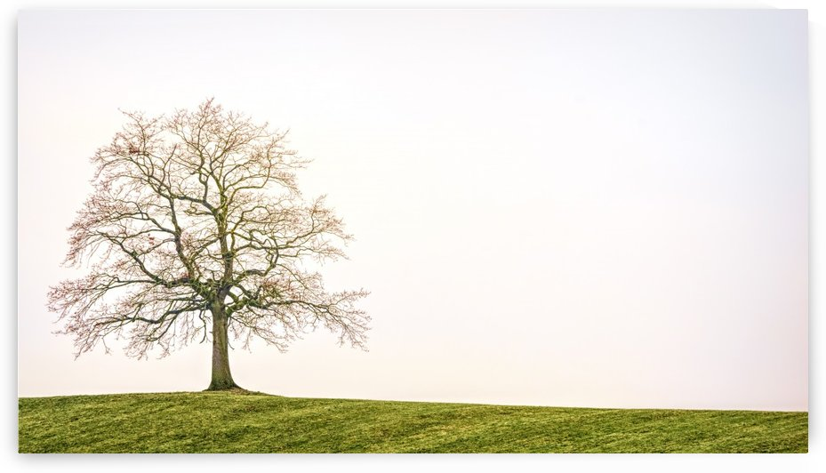 tree, nature, landscape, individually, autumn, meadow, lonely, mood, loneliness, by fabartdesigns