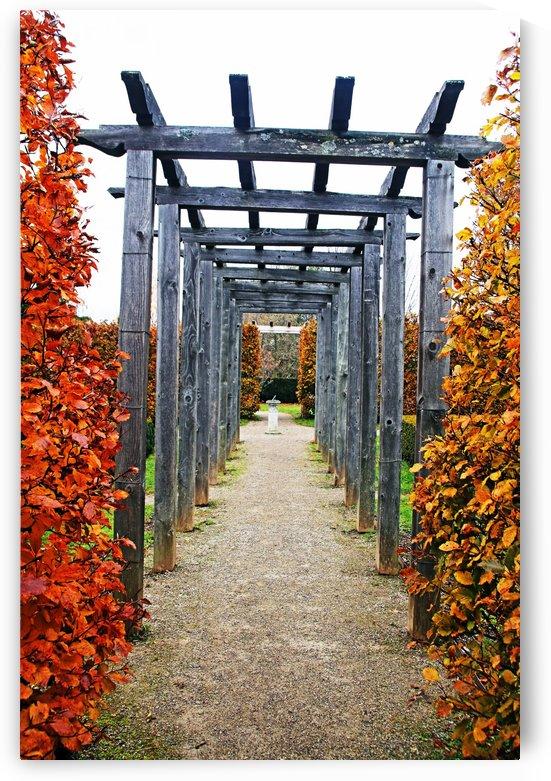 Autumn Arbor by Deb Oppermann