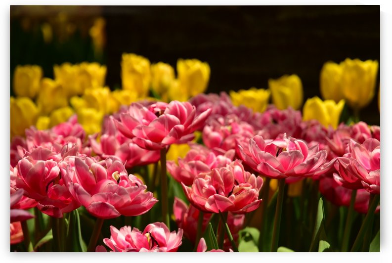 Plants - Flowers - 023 by Rich Lasam