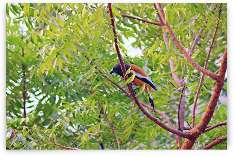 Yellow bird by Nilu Mishra