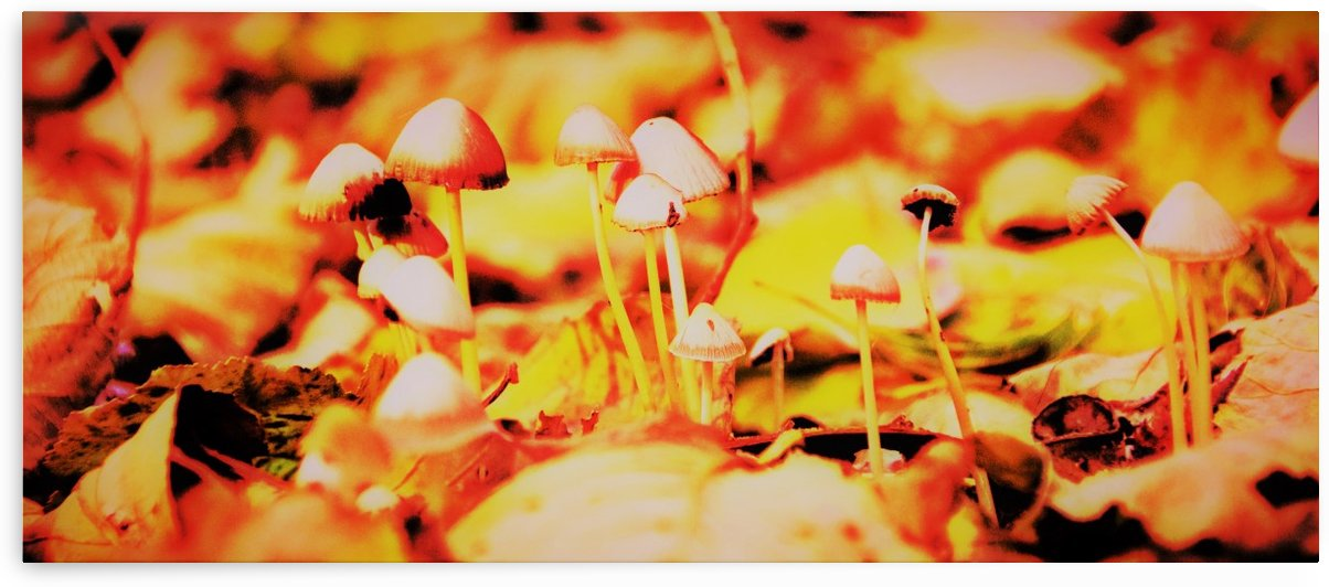 mushrooms by Anu Hamburg