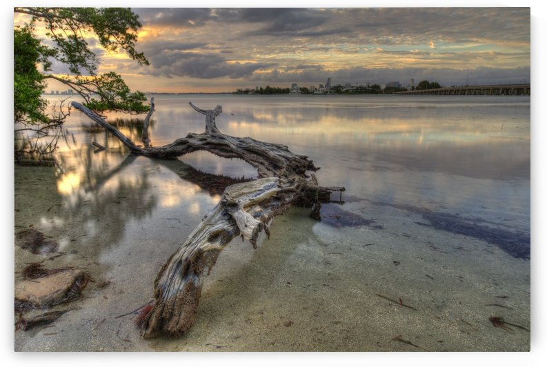 Dead Tree at Sunset by Alex Galiano