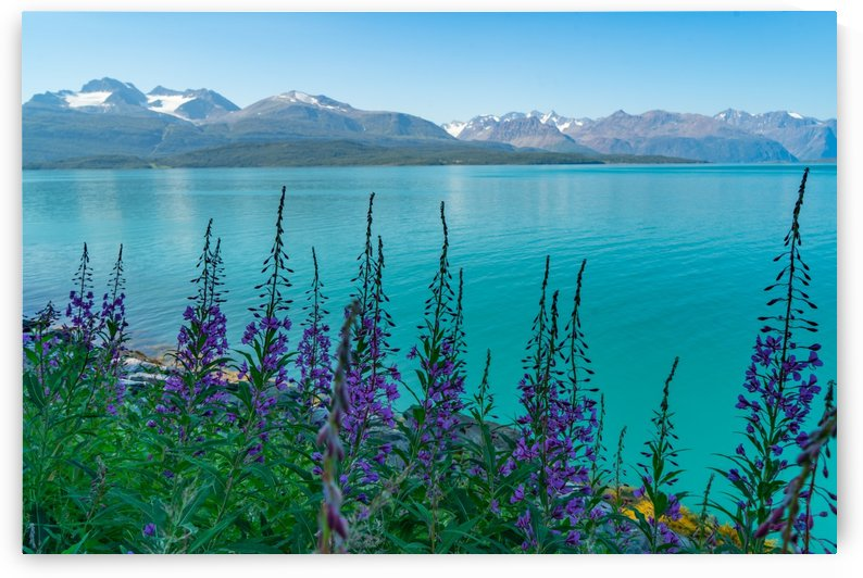 Aqua Fjord Fantastic by Steve Luther