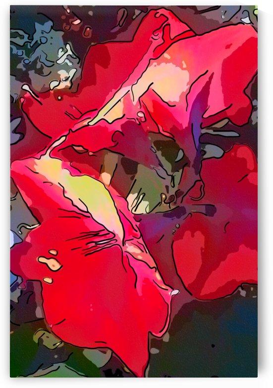 Oh my Amaryllis II by CanvasBloom