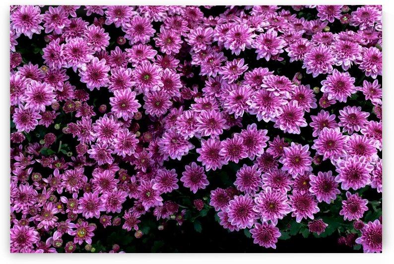 Purple flower by Krit of Studio OMG