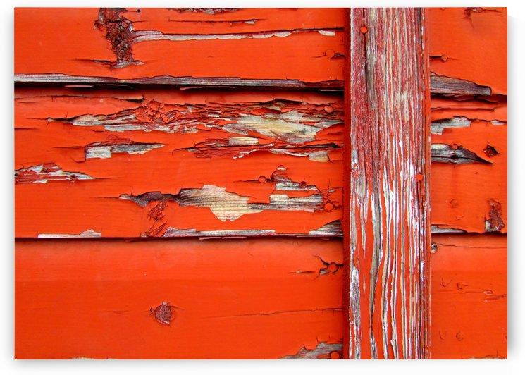 Orange Paint by Olga Osi