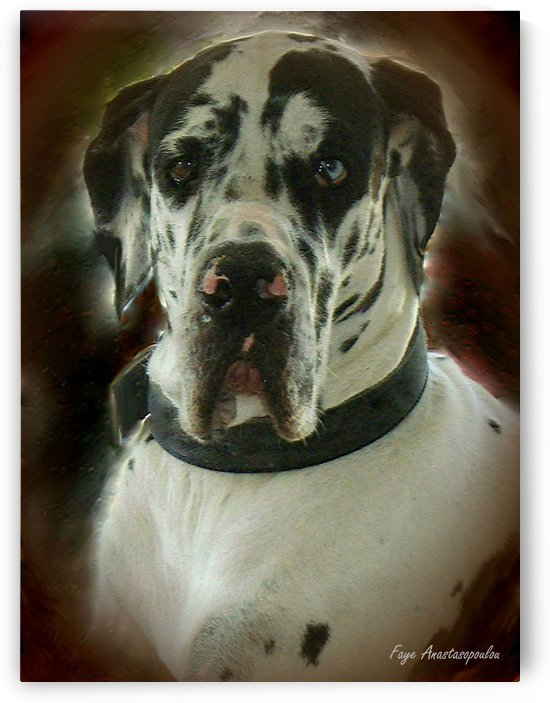 Kaiser The Great Dane by Faye Anastasopoulou