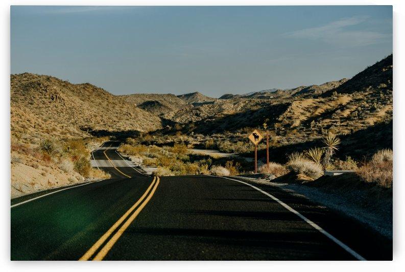 Joshua Tree Road by StephanieAllard