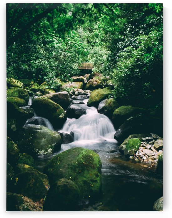 Wairere Falls by Suzanne Atkin