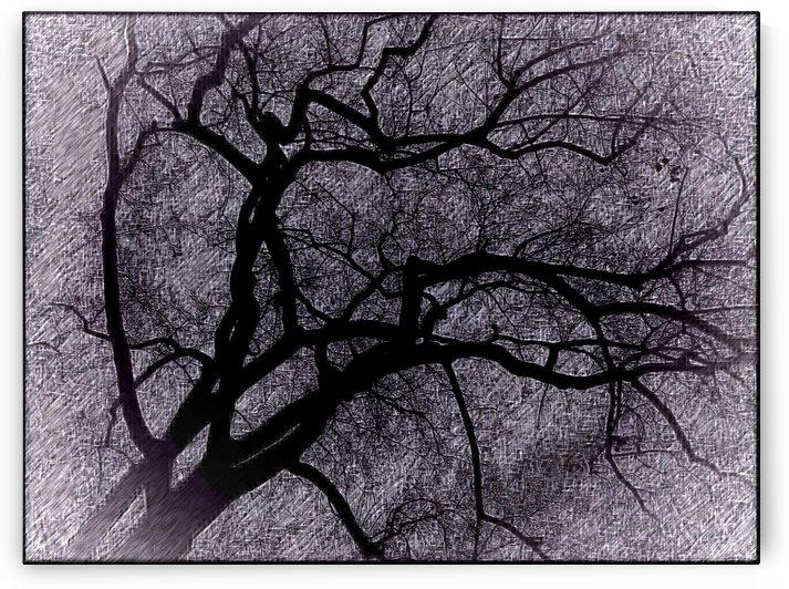 Art Branch of Black Light  by Jeremy Lyman